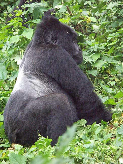 Rwanda Safari Tours