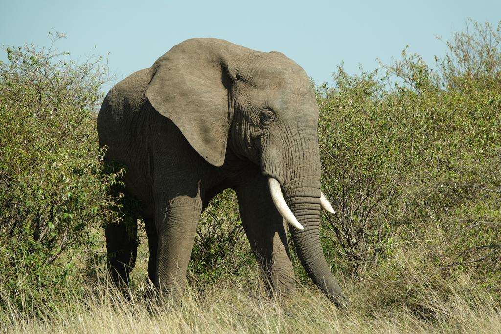 Uganda Safari Classic Tour