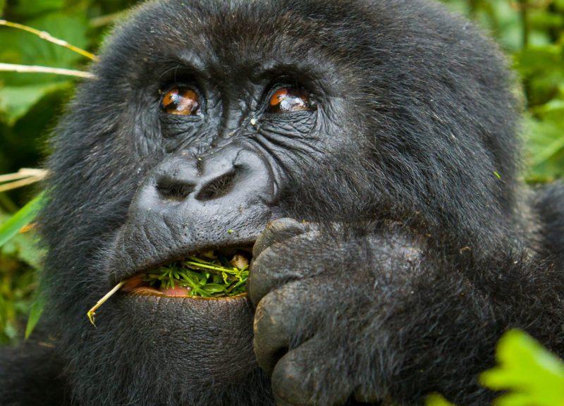 Uganda Safari Adventure Vacation