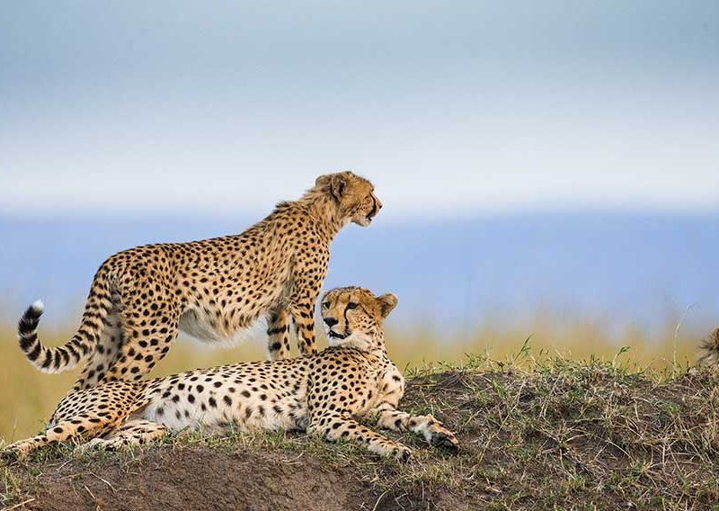 Best African Tanzania Safari