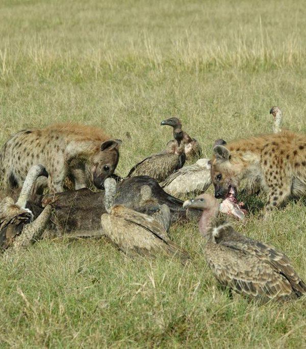 Masai Mara & Lake Nakuru Safari