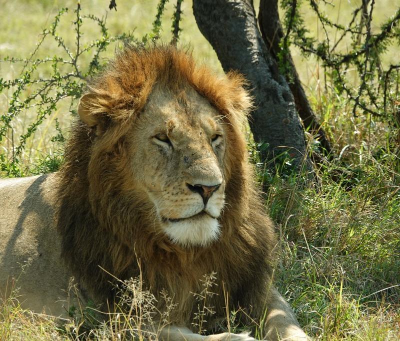 Migration Serengeti Safari Tour