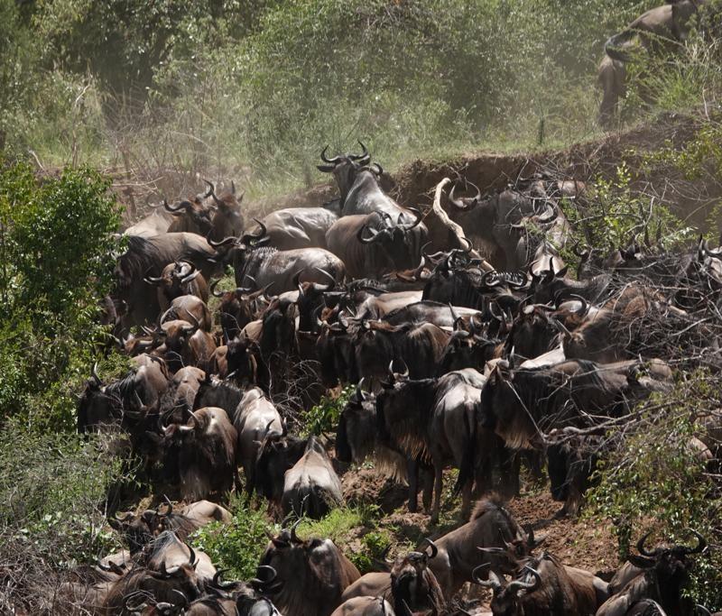 Kenya and Tanzania Safari Holiday